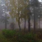 Stennäset, Falun